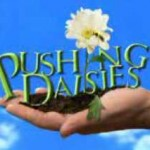 """O que eu achei de """"Pushing Daisies""""?"""
